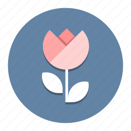 camera, closeshot, closeup, flower, photography, picture, tulip icon