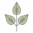 camping, cs6, green, leaf, leaves, multicolor, nature icon