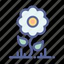 flower, garden, leaf, sunflower