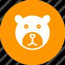 bear, bears, brown, head, polar, tree, wildlife