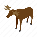 animal, antler, deer, isometric, mammal, nature, wildlife icon