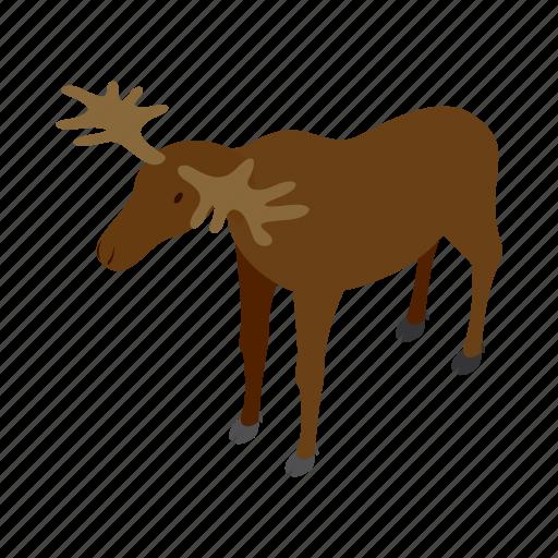 animal, antler, deer, isometric, mammal, nature, wildlife icon