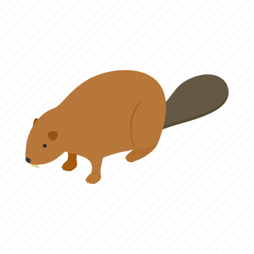 animal, beaver, canada, canadian, fur, isometric, wildlife icon