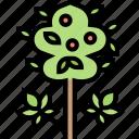 cannabis, flower, plant, weed, marijuana