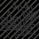 cultivation, farming, agriculture, plant, cannabis
