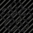 blossom, flower, petals, cherry