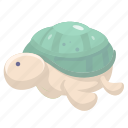 animal, aquatic creatures, cartoon turtletortoise, turtletortoise icon