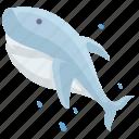 cartoon shark, fish, sea, shark icon