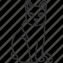 khao, manee, eye, diamond, cat