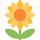 sunflower, bloom, flower, garden, nature, plant, spring