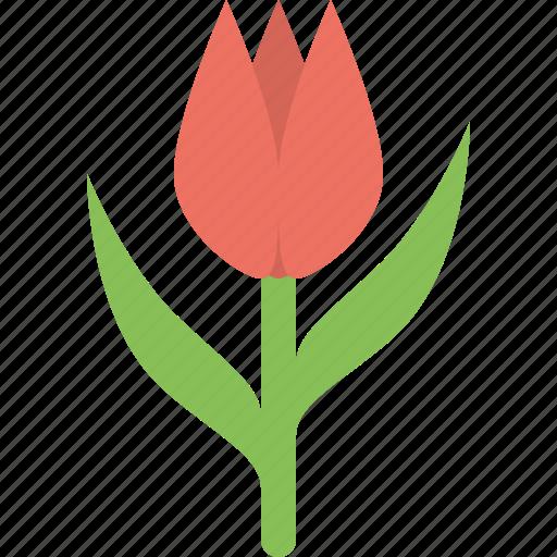 Tulip, blossom, floral, flower, nature, plant, spring icon - Download on Iconfinder