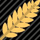 wheat, agriculture, bread, flour, food, harvest, plant