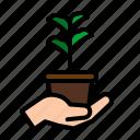 ecology, gardening, leaf, nature, plant