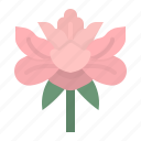 china, chiness, flower, garden, peonie icon