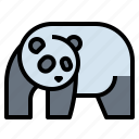 animal, bear, panda, wildlife, zoo