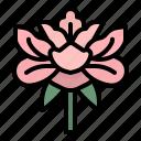 china, chiness, flower, garden, peonie