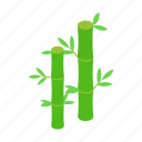 bamboo, decoration, isometric, leaf, nature, plant, tree icon