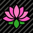 china, flora, flower, lotus, pink, spa
