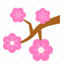 cherry blossom, china, floral, flower, spring season icon