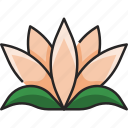 lotus, flower, floral, garden, plant, nature, natural