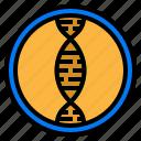 biology, dna, gene, genetic, science