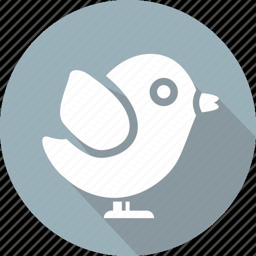 bird, christmas, holiday, vacation, winter icon