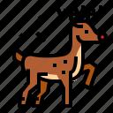 christmas, reindeer, rudolph, xmas