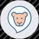 animal, baby animal, circus, face, lion, wild animal, zoo