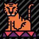 tiger, show, circus, wild, animal, carnival, zoo