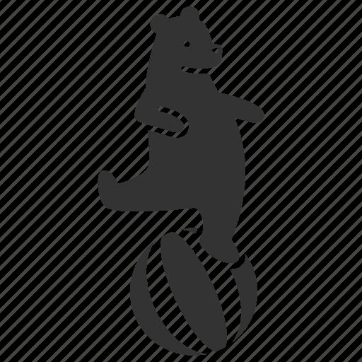 animal training, ball, bear, circus, dancing bear, performance, show icon