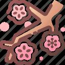 blossom, chinese, cny, flower, newyear, peach
