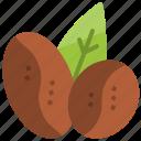 arabica, beans, blend, coffee, leaf, robusta, seed
