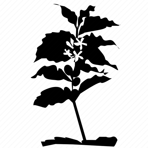 coffee, nature, tree icon