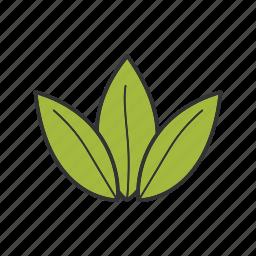 herb, herbal, leaves, plant, tea, tea leaf icon