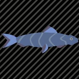 aquarium, fish, hunter, predator icon