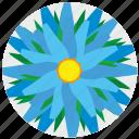 complex, flora, flower, nature