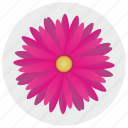 flower, nature, petals, round icon