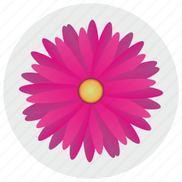flower, nature, petals, round icon