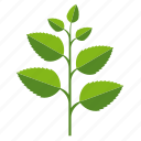 food, herb, ingredients, leaves, mint, plant icon