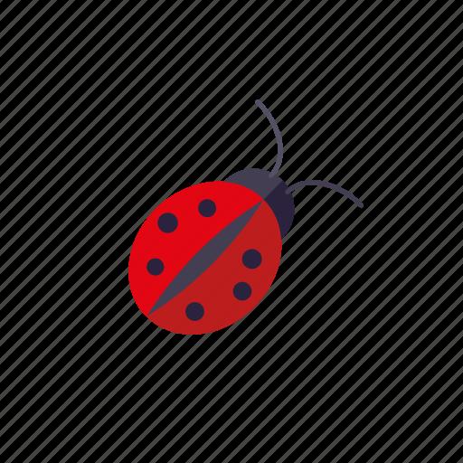 animal, garden, gardening, insect, ladybug, nature icon