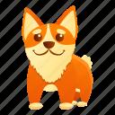 business, cute, dog, corgi, baby