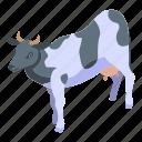 baby, breed, cartoon, cow, food, isometric, silhouette