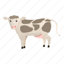 baby, cow, love, spotted