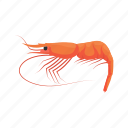 animal, food, king prawn, sea creature, shrimp, sushi, whiteleg shrimp icon