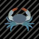animal, blue crab, chesapeake blue crab, crab, invertebrate, sea creature, seafood