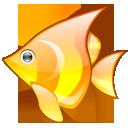 animal, babelfish, fish