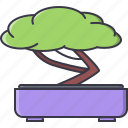 bonsai, civilization, country, culture, japan, tree icon