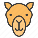 animal, camel, desert, face, head icon