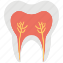 dental, dental pulp, roots, tooth, tooth roots icon