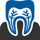 care, dental, dentistry, gum, roots, teeth, tooth icon